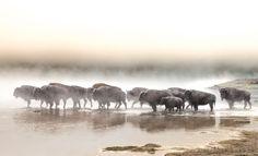 Hesitation Photo by Thomas Szajner — National Geographic Your Shot