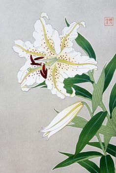 Yuri-Yamayuri(Lily - Mountain Lily)  by Shodo Kawarazaki