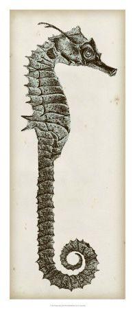 Seahorse, Posters and Prints at Art.com