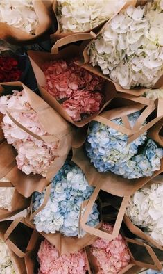 Bags 350928995964504210 - Hydrangeas – hortensias VSCO – fatmoodz Source by patriciabenozio My Flower, Beautiful Flowers, Beautiful Beautiful, Vsco, No Rain, Flower Aesthetic, Wall Collage, Planting Flowers, Floral Arrangements