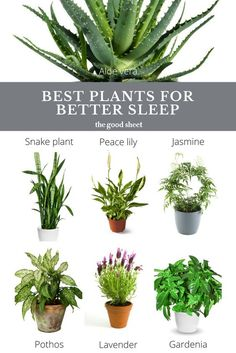 Good hacks | best plants for better sleep | best indoor bedroom plants | aloe vera | jasmine | snake plant | peace lily | pothos | lavender | gardenia | sleep tips