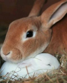 Bunny rabbit with baby - sweet / cute / animal photography pictures / photos