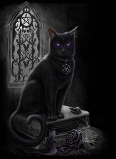 Witches Black Cat by ~Sheblackdragon on deviantart                                                                                                                                                                                 More
