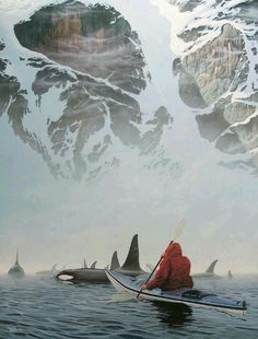 Kayaking with Killer Whales in Sooke, British Colombia...Wow.