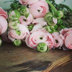 Irene webb @the_lone_hydrangea Ranunculus say no...Instagram photo | Websta (Webstagram)