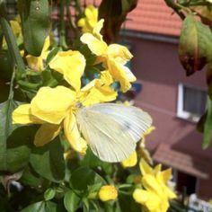 Balconi fioriti e farfallosi