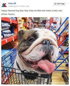 National Dog Day - Petco