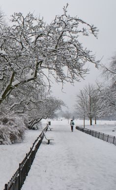 Winter in Regents Park