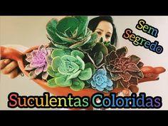 Início - YouTube Cactus, Plantar, Succulents, Nora, Wallis, Biscuit, Youtube, Succulents Garden, Colorful Succulents