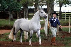 Caballos Criollos - is the native horse of Uruguay (1910), Argentina (1918), Brazil (1932) and Paraguay. It may have the best endurance of any horse breed in the world next to the Arabian.