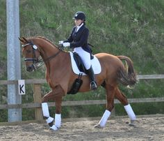 Dressage, Bespoke, Riding Helmets, Horses, Hats, How To Wear, Animals, Style, Fashion