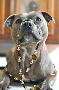 Gorgeous #pitbull