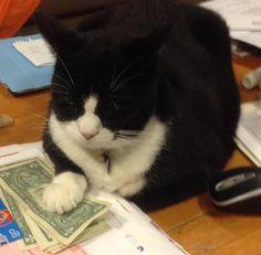Money maker!!