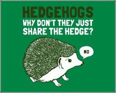 hedgehogs; love it.