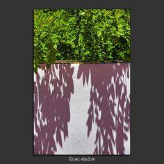 Meridiana claridad: Rose shadow