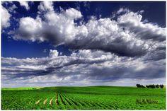 Posted by Martin A. Mora (North Platte, United States) on 26 August 2011 in Landscape & Rural and Portfolio.    Potato Farm  martinmora.aminus3.com