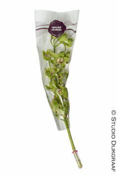 www.studiodijkgraaf.nl Productfotografie Orchidee