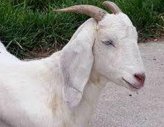 Resultado de imagen para animales albinos famosos