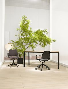 From Milano: the STUA black home-office with a new black-framed Deneb table with walnut top and Gas swivel-chairs.