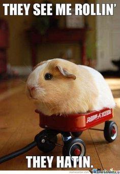 just-a-guinea-pig_o_449616.jpg;  450 x 655 (@100%)