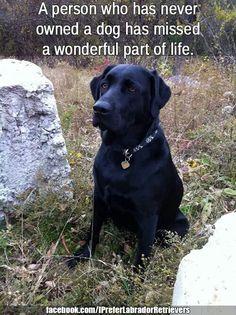 ♡Love a black Lab...best dog ever..