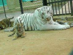 Van Vihar Wildlife Sanctuary - in Rajasthan, India