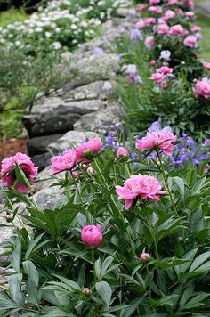 "One pinner said, ""In June I'd have peonies, siberian iris, daisies, forget-me-nots, perennial batchelor button, lady's mantle"