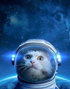 Space Cat Astronaut looking into the deep