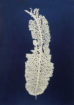 "Crisp-Ellert Art Museum presents ""Celeste Roberge: Ocean Floors"""