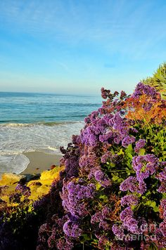 ✯ Flowers At The Beach