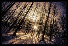 COLD MORNING POSTS | ما أجمل الصباح، صور تشعرك ببرودة ...