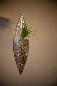 Hanging Air Plant - Cigar Shape
