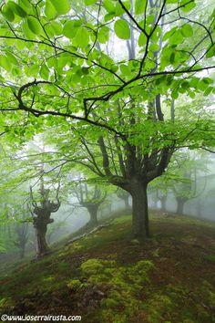 The Basque Forest – Parque Natural de Gorbeia, Basque, Spain