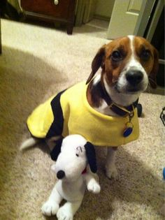 @andersonlive #Pintober my beagle Charlie Brown is going as himself with his pal snoopy! @therealhemi