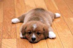 Cute-Dog-Breeds-Small1.jpg (500×332)