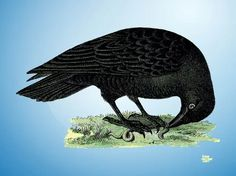 Raven Free Vector Silhouette Clip Art, Animal Silhouette, Free Vector Images, Vector Free, Nature Vector, Zoo Animals, Sea Creatures, Vector Graphics, Vector Design
