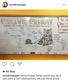 feline friday-white board messages