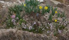 тюков соломы Садоводство - Поиск Google