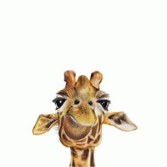 For Me By Dee animal art prints are sure to brighten and add character to any room! This beautiful quality giclee print of an original giraffe water colour painted by Dee is printed professionally wi.