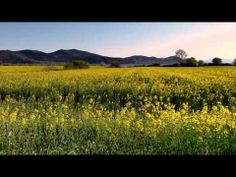 LAGO TRASIMENO IN PRIMAVERA - Spring Lake Trasimeno [1080p HD]
