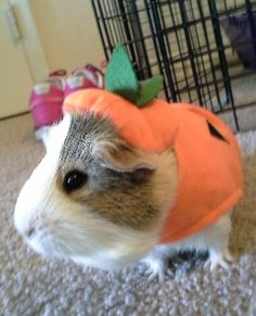 There's big fun for small pets with the All Living Things® Pumpkin Small Pet Costume - PetSmart $1.47 (credit Stephanie S.)