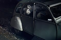 The Silence of Dogs in Cars | Feel Desain
