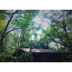 ❄︎ ・ ・ ・ 明日から また頑張ろう(^ω^) ・ ・ ・ #森林 #高原 #風景 #風景写真 #木漏れ日 #ファインダー越しの私の世界 #春 #散歩 #日々の暮らし #ミニマル #シンプル #持たない暮らし #vscocam #spring #写真好きな人と繋がりたい #写真撮ってる人と繋がりたい #iphone7plus #iphoneography #森 #天国 #forest #green #癒し#植物のある暮らし #ロッジ #vsco by sa.chi.co_