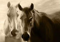 Origenes del Caballo http://www.mascotadomestica.com/articulos-sobre-caballos/origenes-del-caballo.html