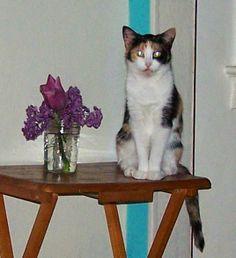 heidi's wanderings: Is Your Cat a Demon Cat?