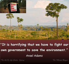"""""""It is horrifying that we have to fight our own government to save the environment."""" Ansel Adams #quote"""