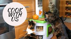 Funny Cats Vlog 42 - Cook with us !
