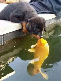 Quite Possibly the Best Kiss Ever                                                                                                                                                      More