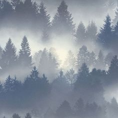 Barbara Becker Misty Forest Wallpaper in blue features a mysterious forest design ideal for bringing a touch of nature into your home. Free UK delivery available Blue Grey Wallpaper, Wallpaper Uk, Blue Wallpapers, Textured Wallpaper, Tree Leaf Wallpaper, Forest Wallpaper, Misty Forest, Pine Forest, Palm Tree Plant