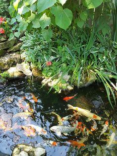 Aquarium, Backyard, Aquarius, Yard, Fish Tank, Backyards
